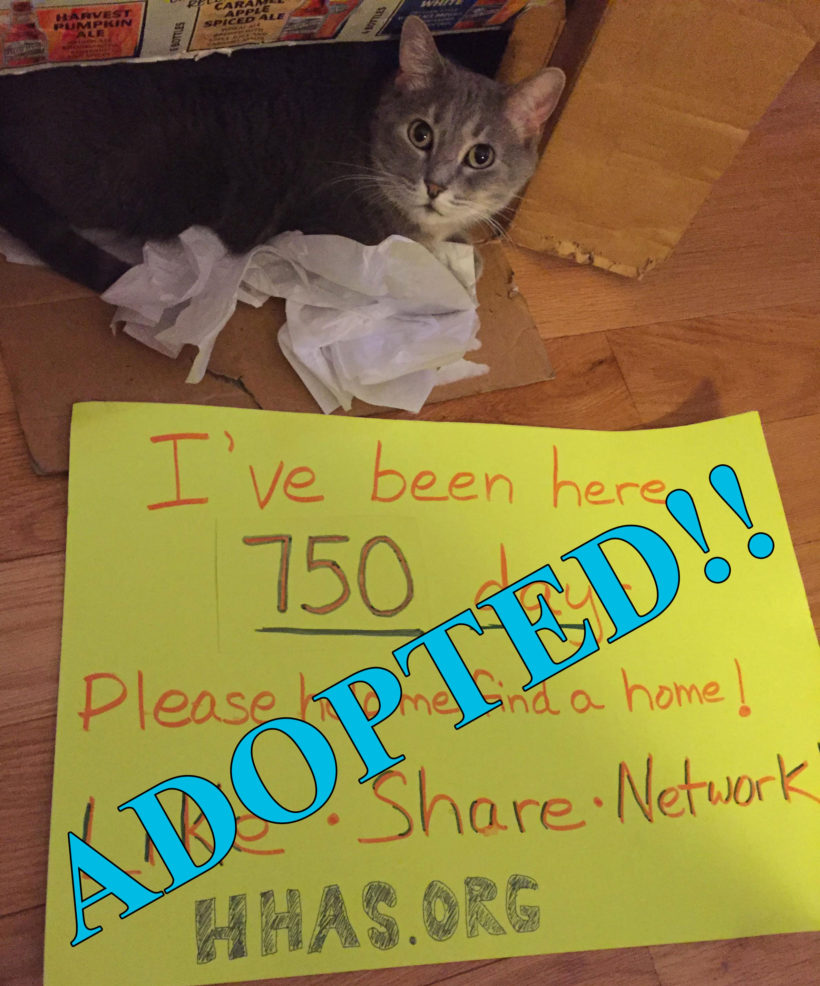 Success! After 910 days, Lucinda found her Forever Home!