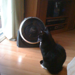 9 Ways to Keep Cats Cool in Summer Heat