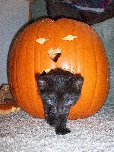 No Adoption Hours on Halloween (Wed Oct 31st)