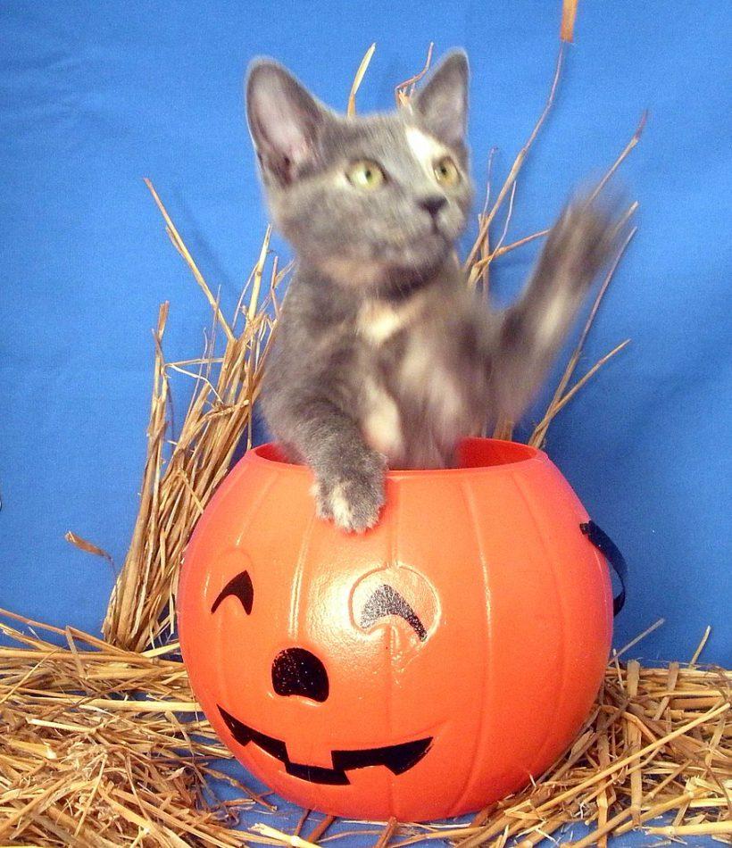Spooky Paint Your Pet & Sip!