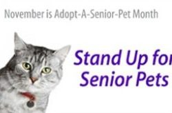 November is Adopt A Senior Pet Month