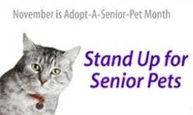 Adopt A Senior Pet Month Featured Cat: Gorgeous George