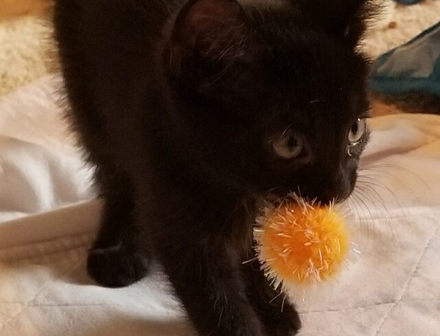 Meet our new adoptable kittens!