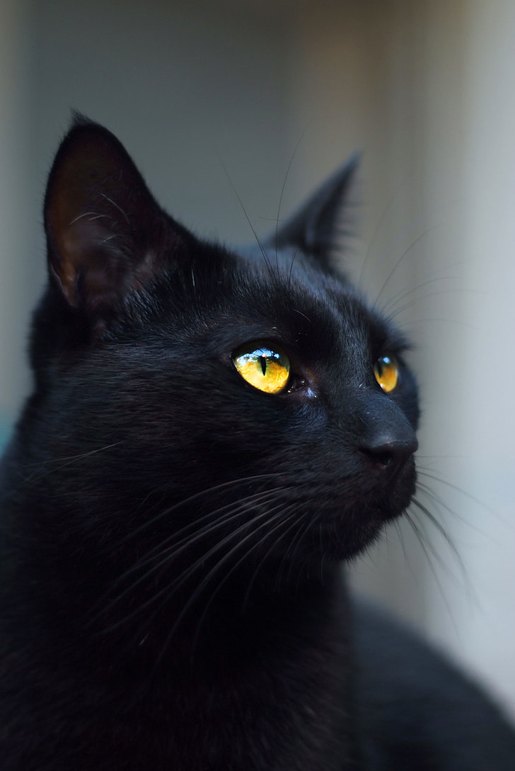 August 17th is Black Cat Appreciation Day